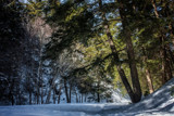 A Bench in Winter Revisited by Eubeen, photography->nature gallery