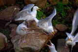 feeding frenzy by solita17, Photography->Birds gallery