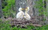 Nesting  32 by 100k_xle, Photography->Birds gallery