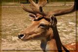 Buckeroo by Jimbobedsel, Photography->Animals gallery
