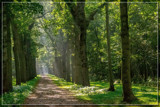 Forest Lane 2 by corngrowth, photography->landscape gallery