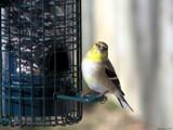 Smile Big by Hottrockin, Photography->Birds gallery