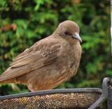 Last years by owldgirl, photography->birds gallery