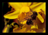 yellow by JQ, photography->insects/spiders gallery