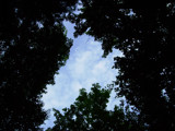 Through the Trees by thecpn, Photography->Skies gallery