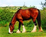 HEAVY HORSE by LANJOCKEY, Photography->Animals gallery