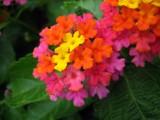 Trix by Hottrockin, Photography->Flowers gallery