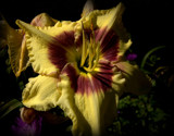 Lily Ever So Bright by tigger3, photography->flowers gallery
