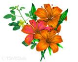 Lilies by vangsdesign, illustrations->digital gallery