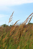 Tall Grass by Pistos, photography->nature gallery