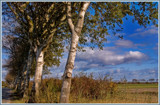 Walcheren Country Roads & Paths 19 by corngrowth, Photography->Landscape gallery