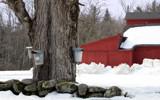 A Sugar Bush by phasmid, Photography->Landscape gallery