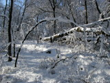 Spring Snowfall by Silvanus, photography->landscape gallery