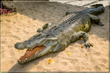 Sunbathing Friend by corngrowth, photography->reptiles/amphibians gallery