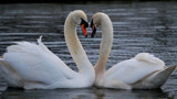 Love Is In The Air by braces, photography->birds gallery