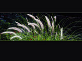 Graceful Grass by wheedance, Photography->Nature gallery