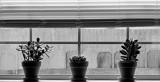 Window Garden by LakeMichigan, contests->b/w challenge gallery
