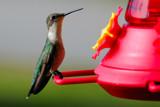 Lanky Lady by 100k_xle, Photography->Birds gallery