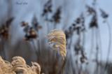 Survivor Of Winter by tigger3, photography->gardens gallery