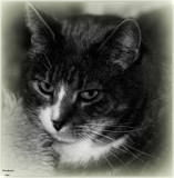 Handsome_My Sweet Boy by tigger3, contests->b/w challenge gallery