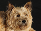I need a haircut by Paul_Gerritsen, Photography->Pets gallery