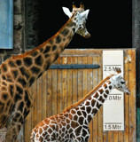 When You're As Tall As Me... by braces, Photography->Animals gallery