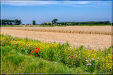 Decorating The Fields by corngrowth, photography->landscape gallery
