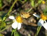 Dusty Wings by rhelms, photography->butterflies gallery
