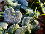 Frosty Morning by BossCamper, Photography->Macro gallery