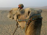 My Camel Ride by chuqito, Photography->Animals gallery