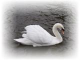 enchanting... by fogz, Photography->Birds gallery