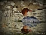 Bird by picardroe, photography->birds gallery