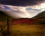 Scottish Heather by LANJOCKEY, Photography->Landscape gallery