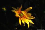 Flowers by doughlas, photography->flowers gallery