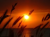 Sunset with Grass (repost) by foo, photography->sunset/rise gallery
