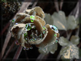 Drops by Larser, Photography->Manipulation gallery