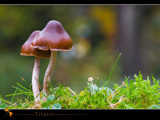 titans by kodo34, Photography->Mushrooms gallery