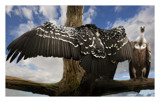 wing span by JQ, Photography->Manipulation gallery