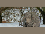 Monarch of the Snowy Plains by kidder, Photography->Sculpture gallery