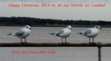 The Three Wise Gulls by braces, holidays->christmas gallery