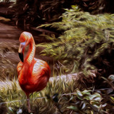 Pink Bird by casechaser, photography->manipulation gallery