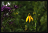 Thursday Foofiness by Jimbobedsel, Photography->Flowers gallery