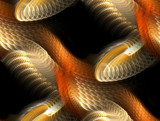 WhiteSnake by jswgpb, Abstract->Fractal gallery