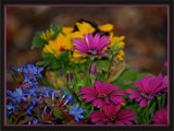 Flowers in a Barrel by djholmes, Photography->Flowers gallery