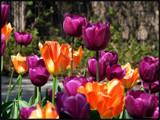 Joyfully Jouncy by Hottrockin, Photography->Flowers gallery