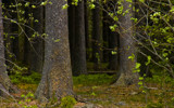 Wildscape by SEFA, Photography->Landscape gallery