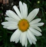 Fresh White by sadun, Photography->General gallery