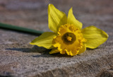 Discarded Foofy by Jimbobedsel, photography->flowers gallery