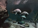 Manatees by Junglegeorge, Computer->3D gallery