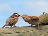 Feed me, feed me! by Si, Photography->Birds gallery